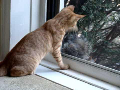 Cute - Cat Plays With Squirrel