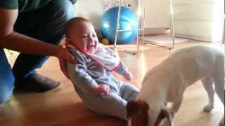 Jack Russell Terrier Makes The Baby Laugh