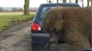 Monkey Tries To Eat Car Parts FAIL