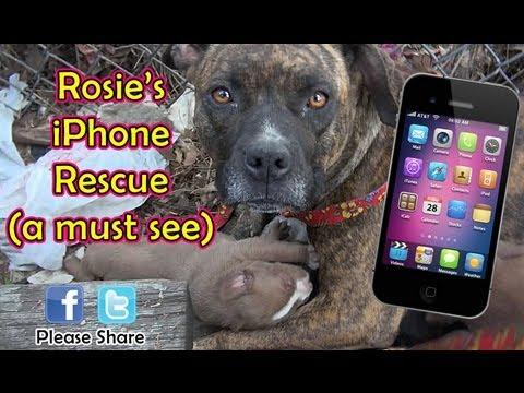Cute - Stray Dog And Puppies Saved Using An iPhone