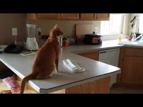 Funny Cat's Attempt To Jump Onto Fridge Fail