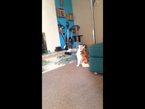 Cat's First Attempt At Pole Dancing