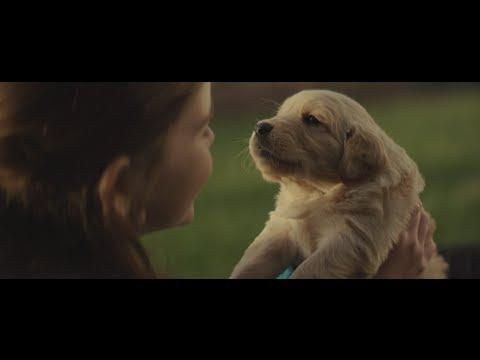 Cute And Touching Ad For Chevy Starring A Dog
