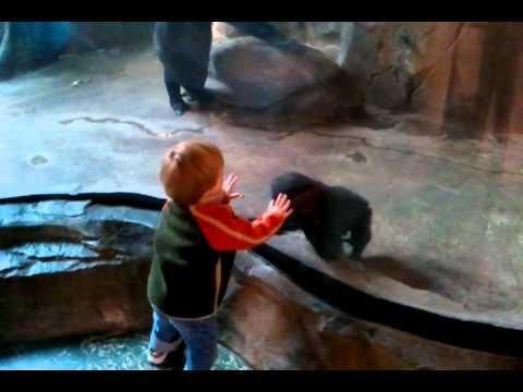 Cute - Baby Boy Plays With Baby Gorilla