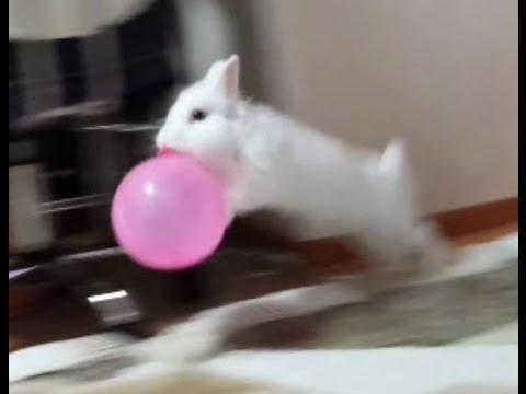 Bunny Loves The Balloon