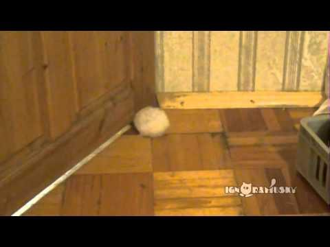 Can The Hamster Squeeze Through Small Door Gap
