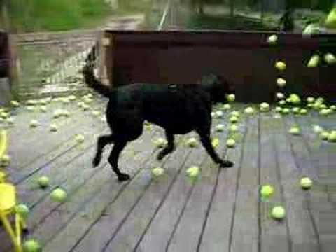 Jokes - Dog Vs Tennis Balls