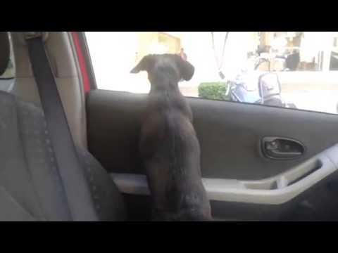 Puppy's Cute Reaction To Seeing His Owner