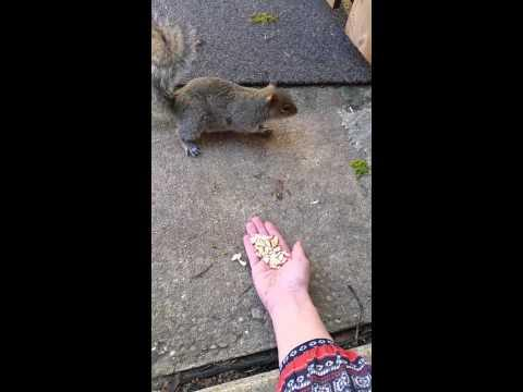 Hand Feeding The Squirrel Fail