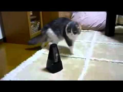 Cute - Cat Plays With Metronome