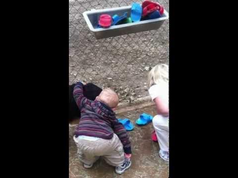 Cute - Baby Boy Hugs Goats