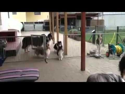 Amazing Dogs Wait For Dinner