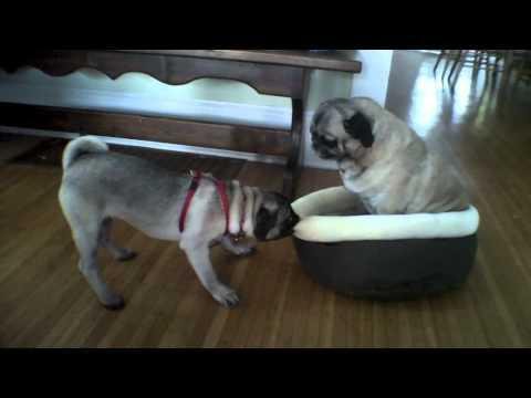 Jokes - Dog Wants The Cat Bed