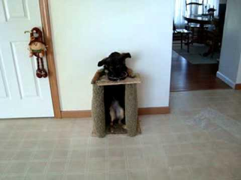 Cute - Custom Built Chair For Dog To Sit And Eat Her Food
