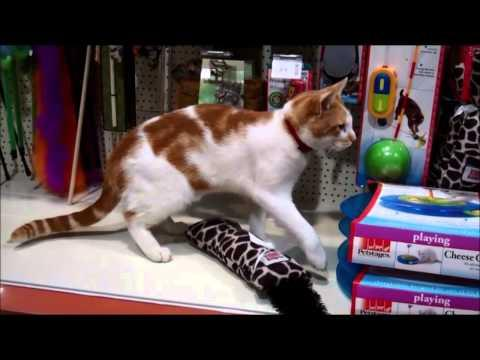 Cat Regularly Visits The Pet Shop