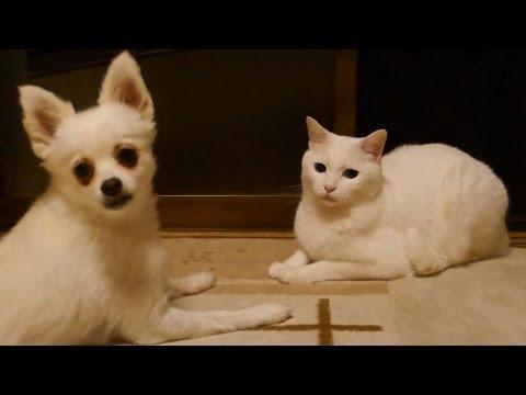 Dog Tests The Patience Of The Cat