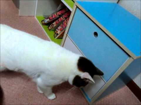 Cat And The Drawer Vs The Owner