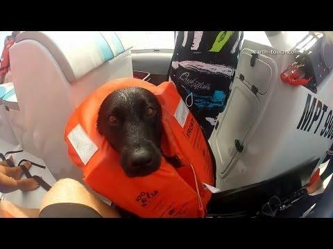 Cute - Dog Goes Swimming With The Dolphins