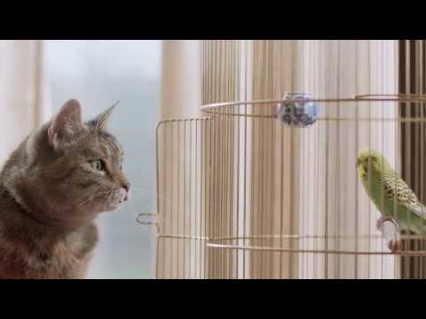 Cute Ad For Freeview TV With Singing Cat And Budgie