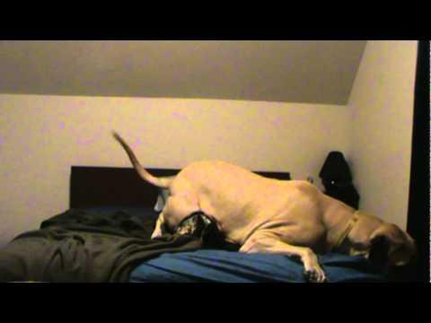 Jokes - Dog Wouldn't Get Off The Bed