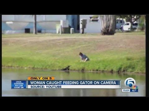 Crazy Woman Feeds The Alligator