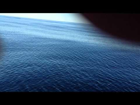Crazy - Great White Shark Circles A Boat