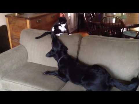 Cute - Dog Plays With The Cat