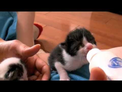 Cute - Bottle Feeding Kittens
