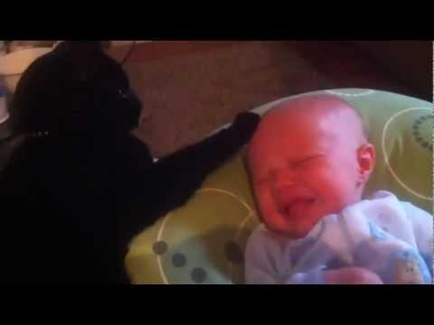 Cat Pets The Crying Baby
