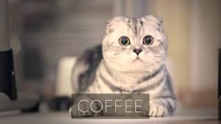 Funny Cat Reactions To Drinks