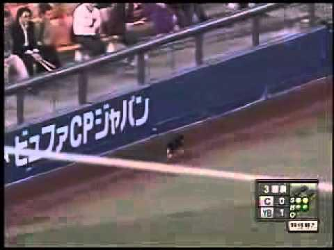 Cat - Cat Interrupts Japanese Baseball Game