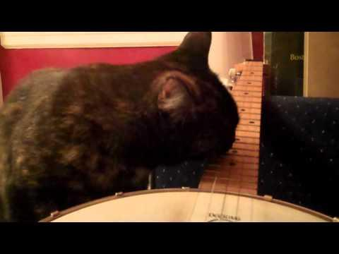 Cute - Cat Plays The Banjo