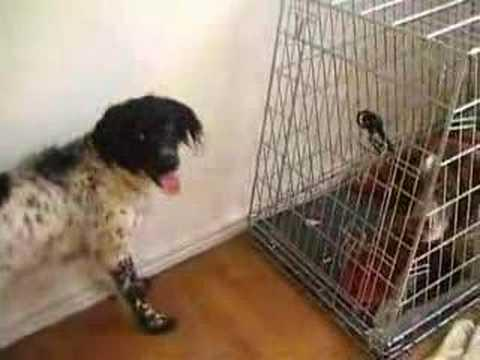Cute - Dog Helps Friend Escape From Cage