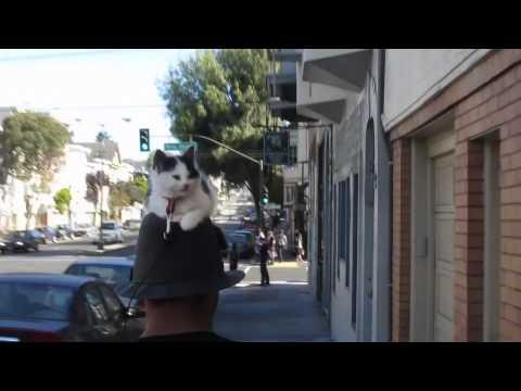 Jokes - Guy Walks Around With Cat On Head