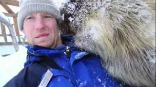 Porcupine Climbs On Guy's Head And Chills