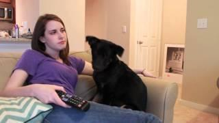 Overly Attached Girlfriend Gets Slapped By Dog