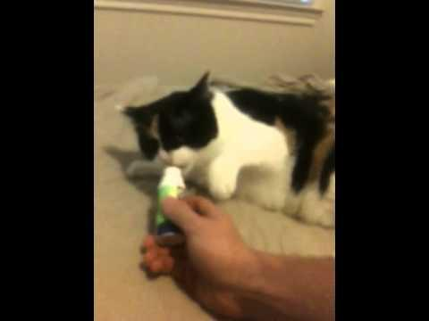 Jokes - Cat Hates The Owner