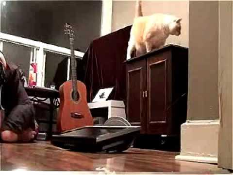 FAIL - Cat Knocks Down TV On The Owner