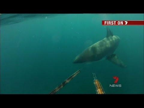 Crazy - Close Encounter With Great White Shark