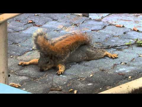 Jokes - Relaxing Squirrel