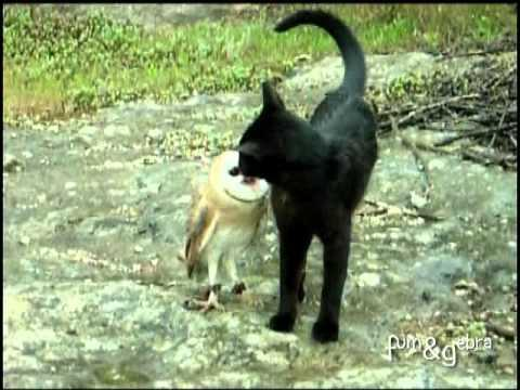Cute - Cat Plays With An Owl