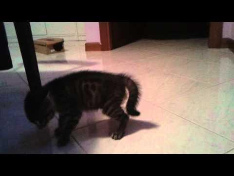 Jokes - Guy Uses His Telekinesis Power On Kitten
