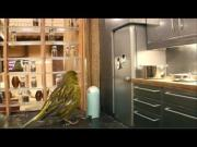 Bird's Luxury House Ad For Robinsons Juice