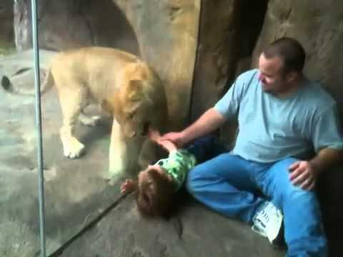 Cute - Lion Cub Plays With Baby Boy