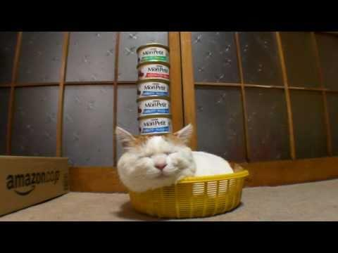 Jokes - Stacked Up Cat Food On Sleeping Cat
