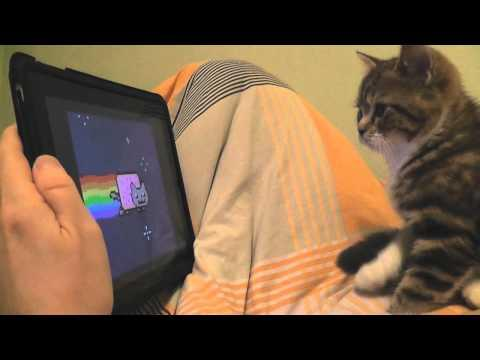 Cute - Cat Watches Nyan Cat Video