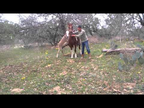 Romeo Donkey Tries To Hit On The Horse - Fail