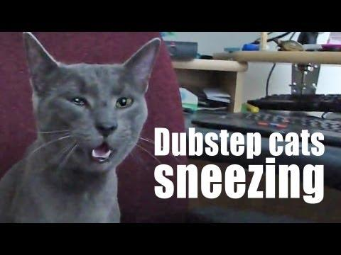 Jokes - Dubstep Music And Sneezing Cats