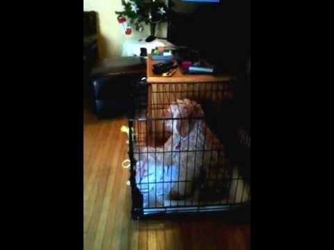 Jokes - Dog's Cage Trick