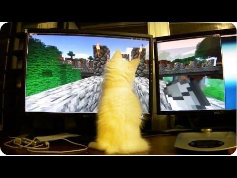 Kitten Loves The Minecraft Game